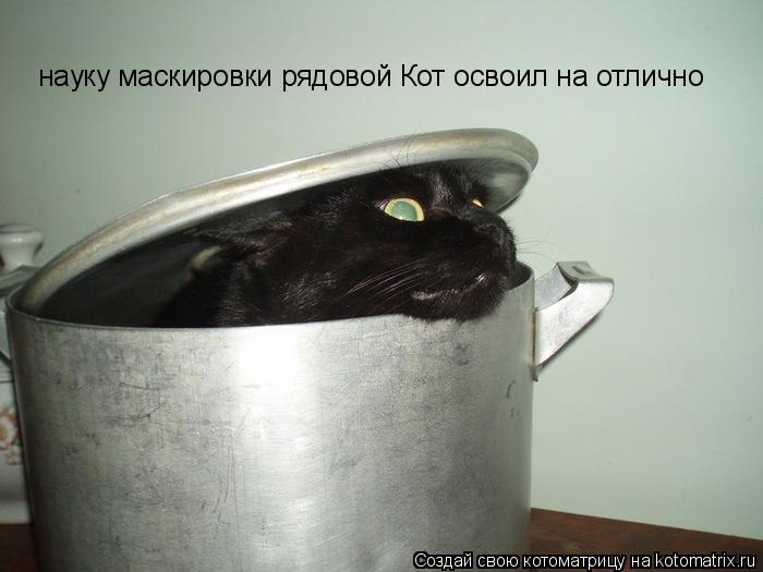 Котоматрица: науку маскировки рядовой Кот освоил на отлично