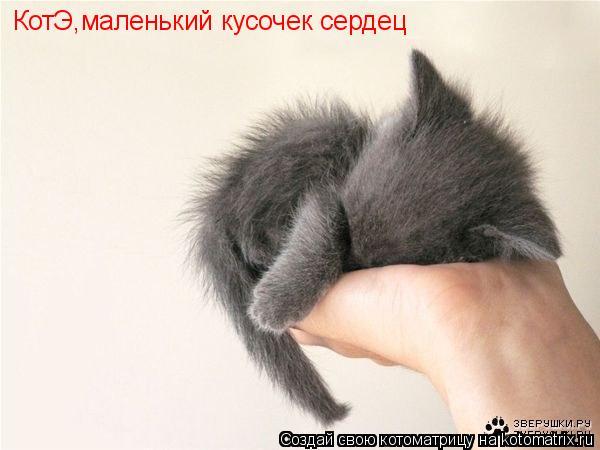 Котоматрица: КотЭ,маленький кусочек сердец
