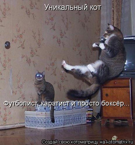 Котоматрица: Уникальный кот Футболист, каратист и просто боксёр...