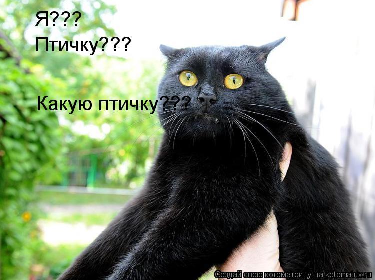 Котоматрица: Я??? Птичку??? Какую птичку???