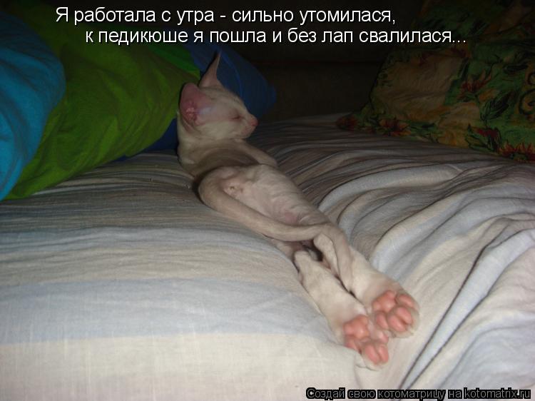 Котоматрица: Я работала с утра - сильно утомилася, к педикюше я пошла и без лап свалилася... к педикюше я пошла и без лап свалилася...