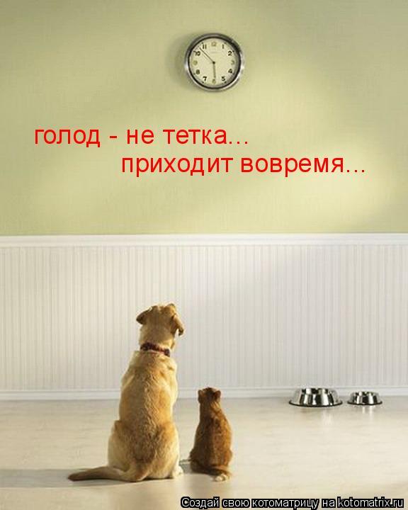 Котоматрица: голод - не тетка... приходит вовремя...