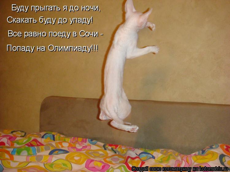 Котоматрица: Буду прыгать я до ночи, Скакать буду до упаду! Все равно поеду в Сочи -  Попаду на Олимпиаду!!!