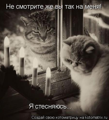 Котоматрица: Не смотрите же вы так на меня!  Я стесняюсь...