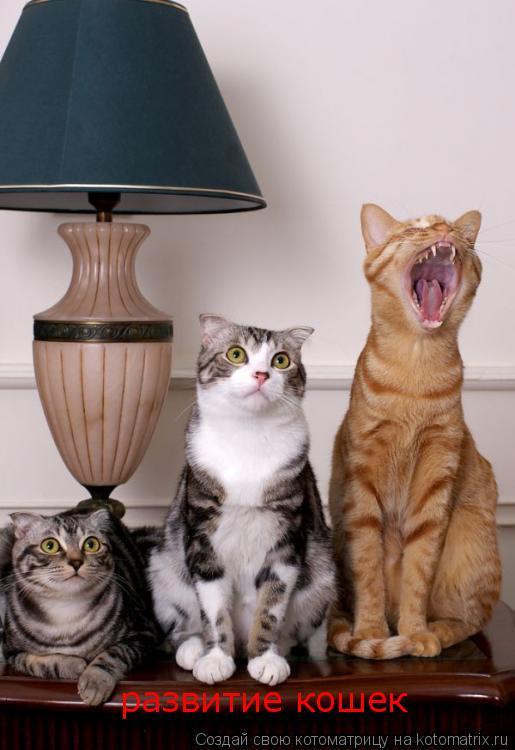Котоматрица: развитие кошек