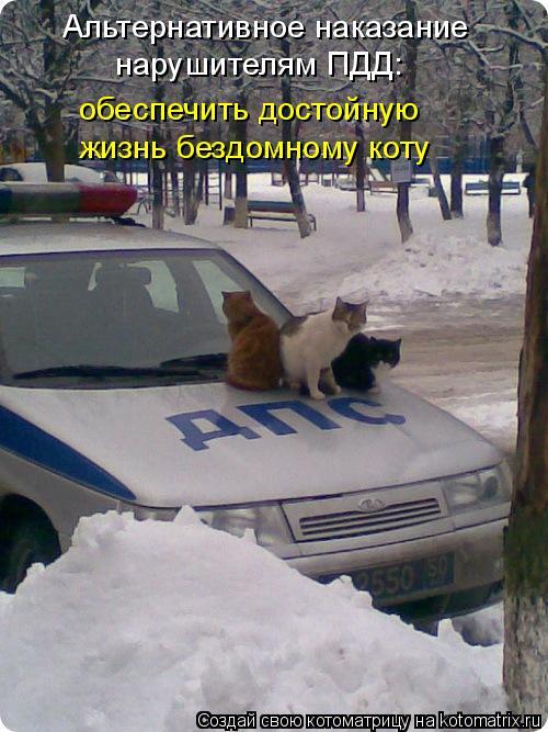 Котоматрица: Альтернативное наказание нарушителям ПДД: обеспечить достойную жизнь бездомному коту