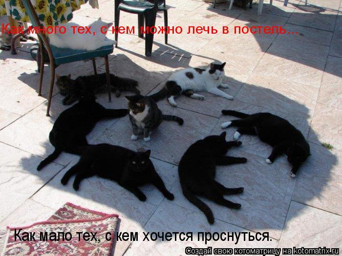 Котоматрица: Как много тех, с кем можно лечь в постель... Как мало тех, с кем хочется проснуться…