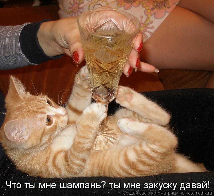 Котоматрица: Что ты мне шампань? ты мне закуску давай!