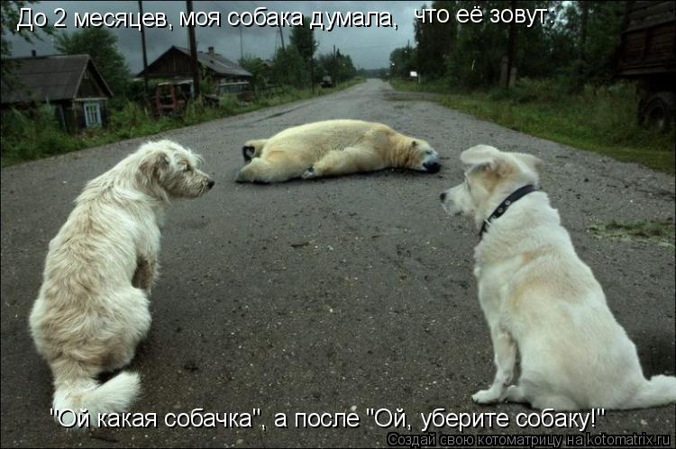 """Котоматрица: До 2 месяцев, моя собака думала, что её зовут: что её зовут: """"Ой какая собачка"""", а после """"Ой, уберите собаку!"""""""