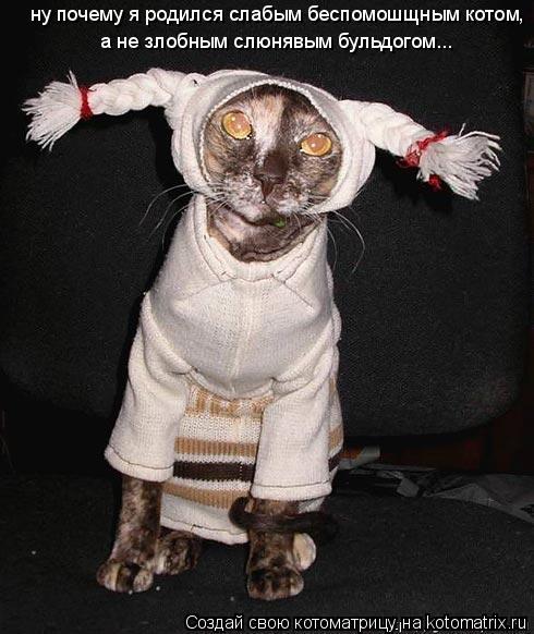 Котоматрица: ну почему я родился слабым беспомошщным котом, а не злобным слюнявым бульдогом...