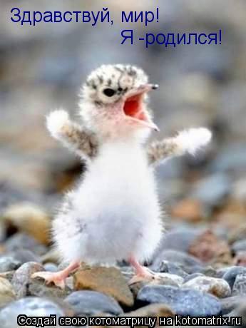 Котоматрица: Здравствуй, мир! Я -родился!