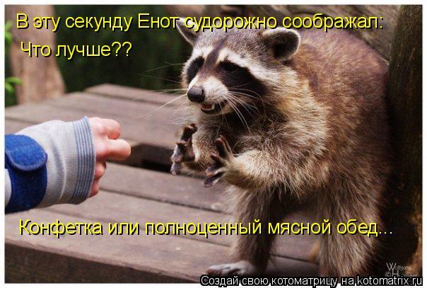 Котоматрица: В эту секунду Енот судорожно соображал: Что лучше?? Конфетка или полноценный мясной обед...