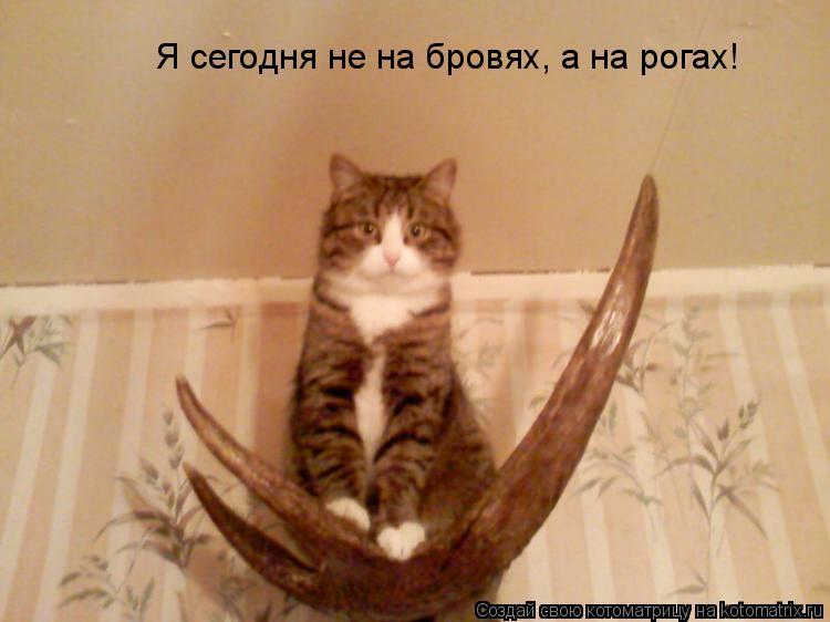 Котоматрица: Я сегодня не на бровях, а на рогах!