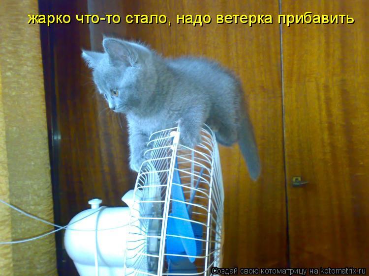 Котоматрица: жарко что-то стало, надо ветерка прибавить