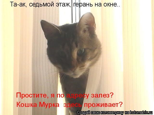 Котоматрица: Та-ак, седьмой этаж, герань на окне.. Простите, я по адресу залез? Кошка Мурка  здесь проживает?