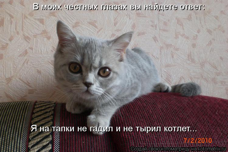 Котоматрица: В моих честных глазах вы найдете ответ:  Я на тапки не гадил и не тырил котлет...