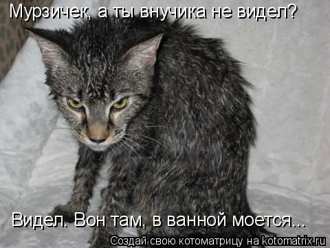 Котоматрица: Мурзичек, а ты внучика не видел? Видел. Вон там, в ванной моется...