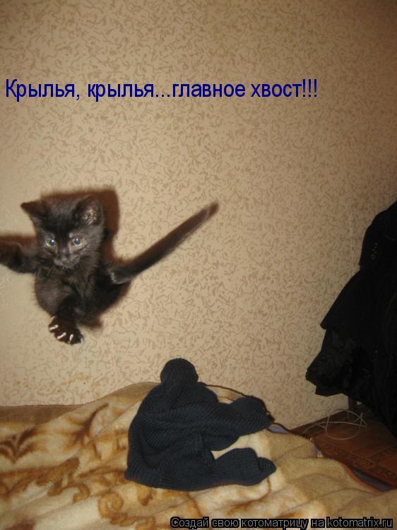 Котоматрица: Крылья, крылья...главное хвост!!!