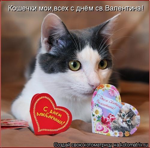 Котоматрица: Кошечки мои,всех с днём св.Валентина!