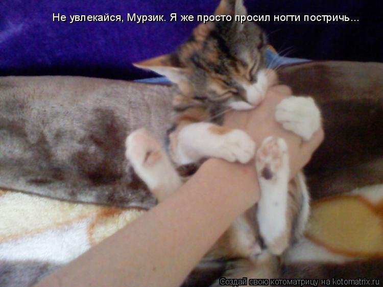 Котоматрица: Не увлекайся, Мурзик. Я же просто просил ногти постричь...