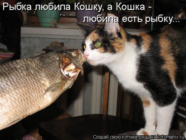 Котоматрица: Рыбка любила Кошку, а Кошка - любила есть рыбку...