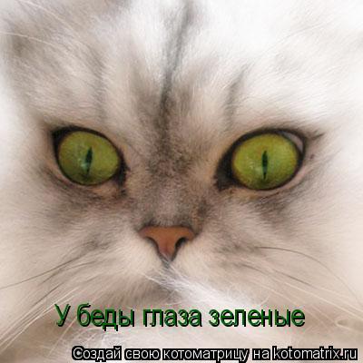 Котоматрица: У беды глаза зеленые