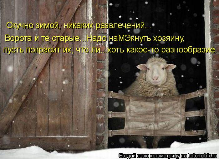 Котоматрица: Скучно зимой, никаких развлечений... пусть покрасит их, что ли...хоть какое-то разнообразие Ворота и те старые...Надо наМЭкнуть хозяину,