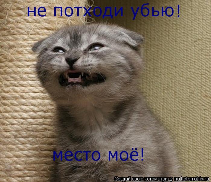 Котоматрица: не потходи убью место моё! !