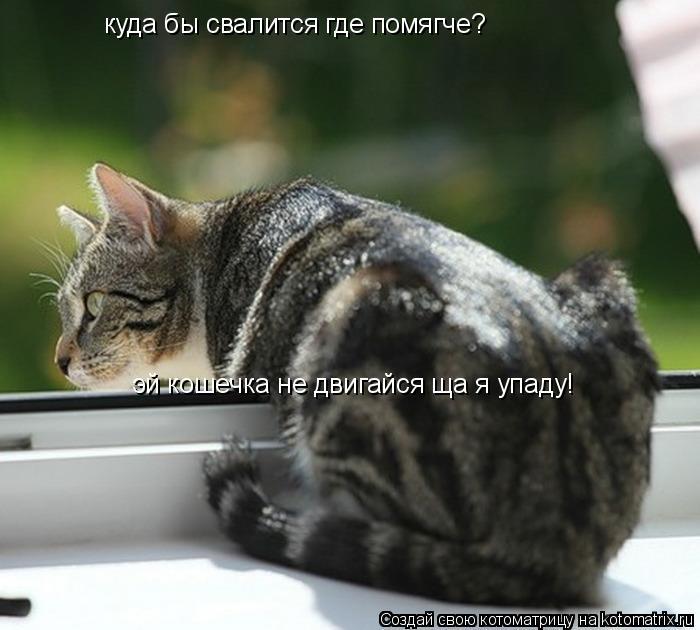 Котоматрица: куда бы свалится где помягче? эй кошечка не двигайся ща я упаду!