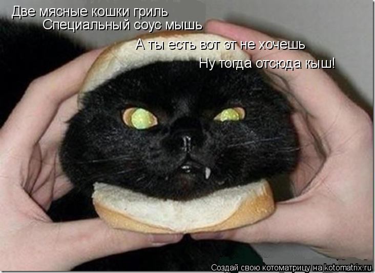 Котоматрица: Две мясные кошки гриль Специальный соус мышь А ты есть вот эт не хочешь Ну тогда отсюда кыш!