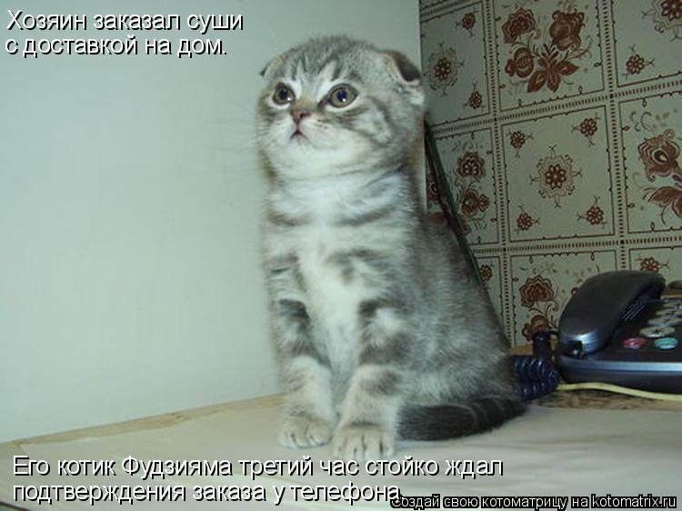 Котоматрица: Хозяин заказал суши  с доставкой на дом.  Его котик Фудзияма третий час стойко ждал  подтверждения заказа у телефона.
