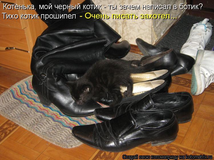 Котоматрица: Котенька, мой черный котик - ты зачем написал в ботик? Тихо котик прошипел  - Очень писать захотел...