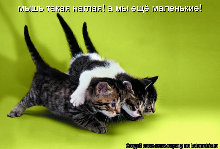 Котоматрица: мышь такая наглая! а мы ещё маленькие!