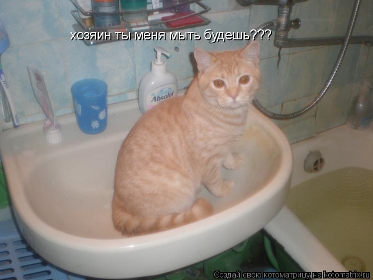 Котоматрица: хозяин ты меня мыть будешь???