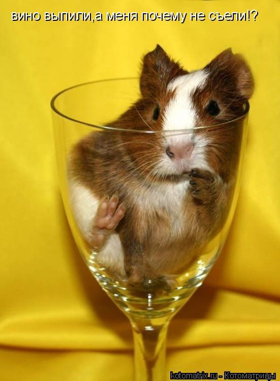 Котоматрица: вино выпили,а меня почему не съели!?