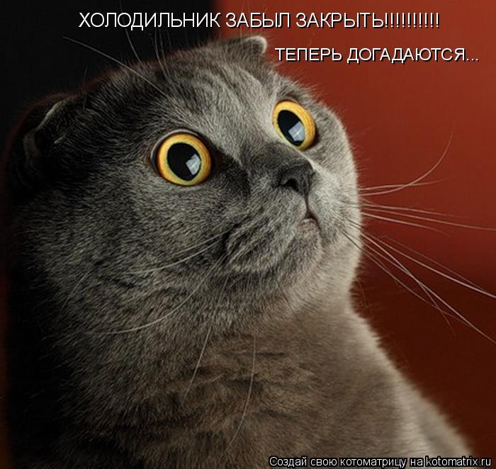 Котоматрица: ХОЛОДИЛЬНИК ЗАБЫЛ ЗАКРЫТЬ!!!!!!!!!! ТЕПЕРЬ ДОГАДАЮТСЯ...
