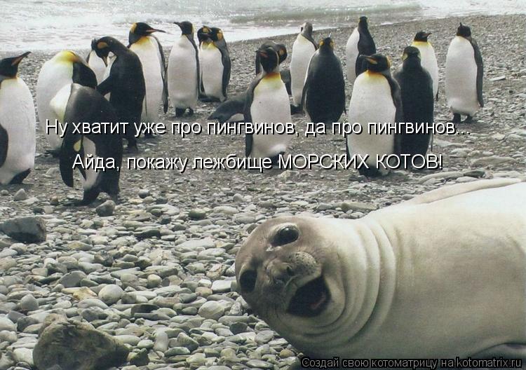 Котоматрица: Ну хватит уже про пингвинов, да про пингвинов... Айда, покажу лежбище МОРСКИХ КОТОВ!