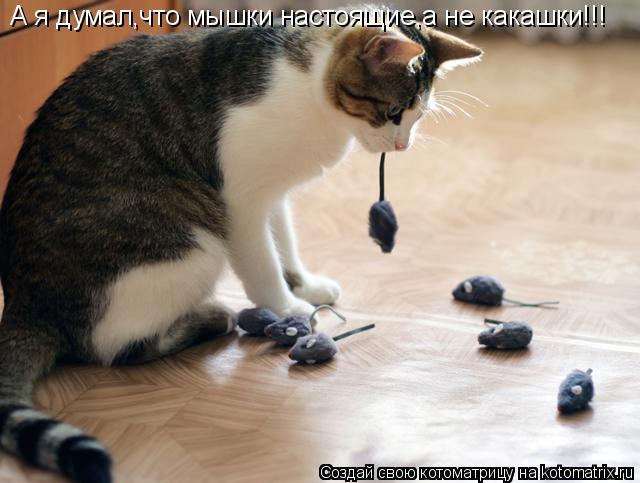 Котоматрица: А я думал,что мышки настоящие,а не какашки!!!
