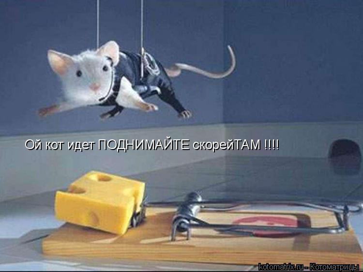 Котоматрица: Ой кот идет ПОДНИМАЙТЕ скорейТАМ !!!!