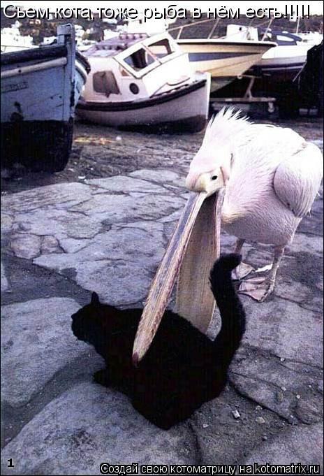 Котоматрица: Сьем кота,тоже рыба в нём есть!!!!!