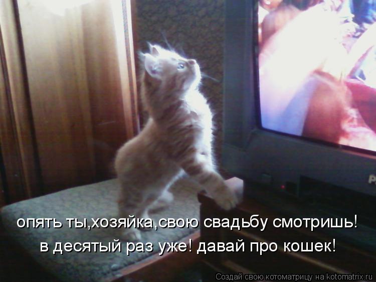 Котоматрица: опять ты,хозяйка,свою свадьбу смотришь! в десятый раз уже! давай про кошек!