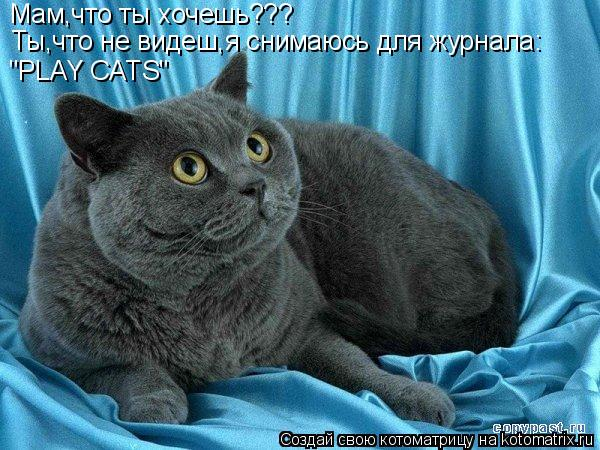 """Котоматрица: Мам,что ты хочешь??? Ты,что не видеш,я снимаюсь для журнала: """"PLAY CATS"""""""