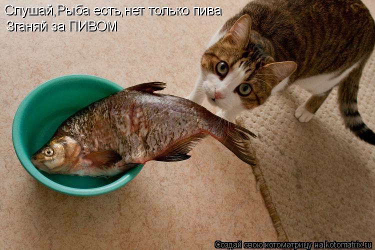 Котоматрица: Слушай,Рыба есть,нет только пива Зганяй за ПИВОМ