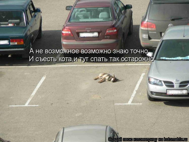 Котоматрица: А не возможное возможно знаю точно И съесть кота,и тут спать так остарожно
