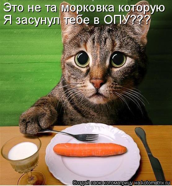 Котоматрица: Это не та морковка которую Я засунул тебе в ОПУ???