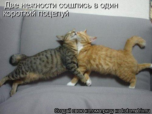 Котоматрица: Две нежности сошлись в один короткий поцелуй
