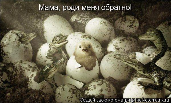 Котоматрица: Мама, роди меня обратно!
