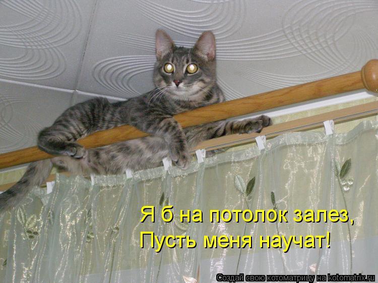 Котоматрица: Я б на потолок залез, Пусть меня научат!