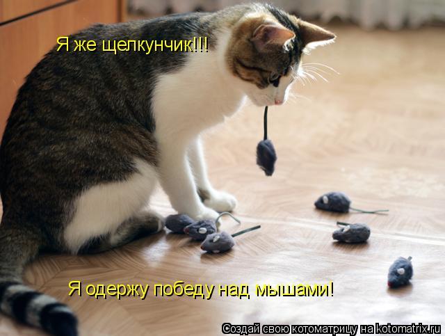 Котоматрица: Я же щелкунчик!!! Я одержу победу над мышами!