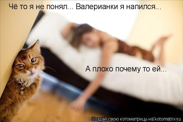 Котоматрица: Чё то я не понял... Валерианки я напился... А плохо почему то ей...